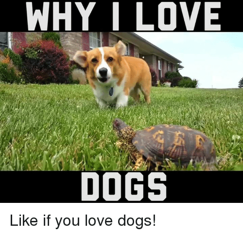 Funny i love you dogs