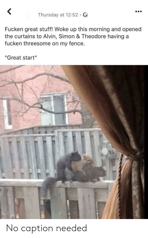 """Curtains, Stuff, and Threesome: <  Thursday at 12:52  Fucken great stuff! Woke up this morning and opened  the curtains to Alvin, Simon & Theodore having a  fucken threesome on my fence.  """"Great start"""" No caption needed"""