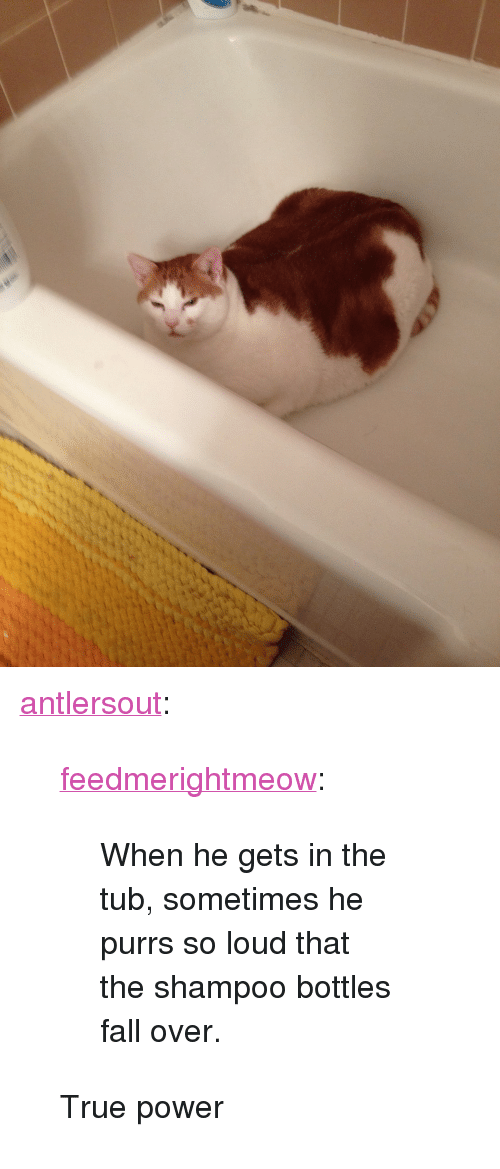"fall over: <p><a class=""tumblr_blog"" href=""http://antlersout.tumblr.com/post/80159659757/feedmerightmeow-when-he-gets-in-the-tub"">antlersout</a>:</p> <blockquote> <p><a class=""tumblr_blog"" href=""http://feedmerightmeow.tumblr.com/post/80103191773/when-he-gets-in-the-tub-sometimes-he-purrs-so"">feedmerightmeow</a>:</p> <blockquote> <p>When he gets in the tub, sometimes he purrs so loud that the shampoo bottles fall over.</p> </blockquote> <p>True power</p> </blockquote>"