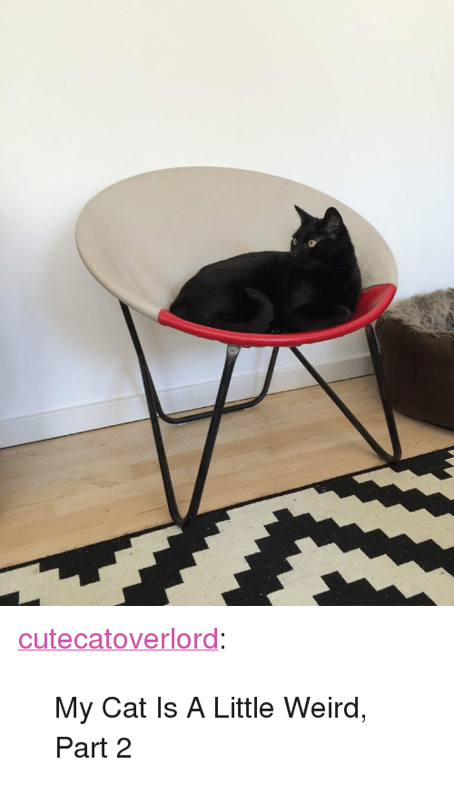 """Tumblr, Weird, and Blog: <p><a class=""""tumblr_blog"""" href=""""http://cutecatoverlord.tumblr.com/post/146012505562"""">cutecatoverlord</a>:</p> <blockquote> <p>My Cat Is A Little Weird, Part 2</p> </blockquote>"""