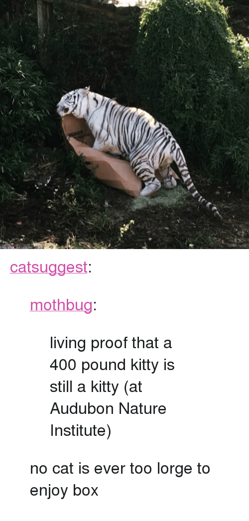 """Tumblr, Blog, and Http: <p><a href=""""https://catsuggest.tumblr.com/post/154711606632/mothbug-living-proof-that-a-400-pound-kitty-is"""" class=""""tumblr_blog"""">catsuggest</a>:</p> <blockquote> <p><a href=""""http://mothbug.tumblr.com/post/154334196651/living-proof-that-a-400-pound-kitty-is-still-a"""" class=""""tumblr_blog"""">mothbug</a>:</p>  <blockquote><p>living proof that a 400 pound kitty is still a kitty  (at Audubon Nature Institute)</p></blockquote>  <p>no cat is ever too lorge to enjoy box</p> </blockquote>"""