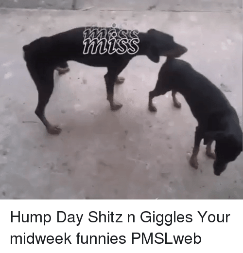 Hump Day: <p>Hump Day Shitz n Giggles  Your midweek funnies  PMSLweb </p>