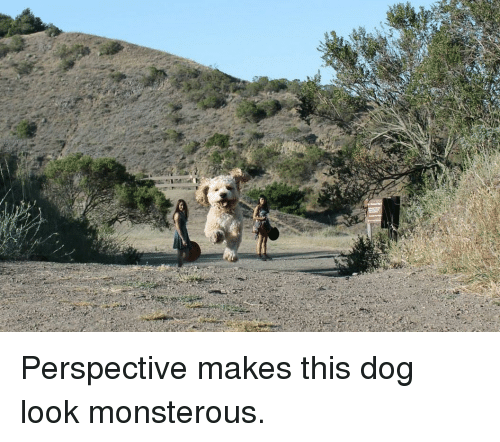 Dog, Perspective, and Look: <p>Perspective makes this dog look monsterous.</p>