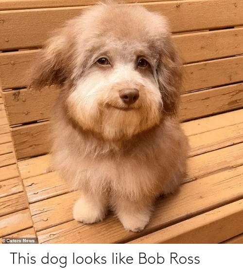 Looks Like: ©Caters News This dog looks like Bob Ross