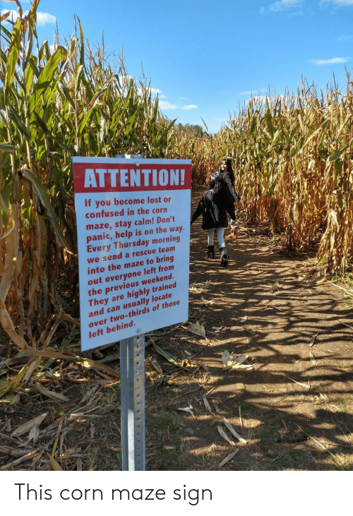 Confused, Lost, and Help: ΑΤΤEΝTIΟΝ!  If you become lost or  confused in the corn  maze,stay calm! Don't  panic,help is on the way.  Every Thursday morning  we send a rescue team  into the maze to bring  out everyone left from  the previous weekend.  They are  and can usually locate  highly trained  over two-thirds of those  left behind. This corn maze sign