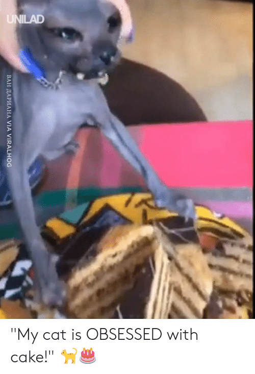 """Dank, Cake, and 🤖: ВАН ДАРИАНА VIA VIRALHOG """"My cat is OBSESSED with cake!"""" 🐈🎂"""