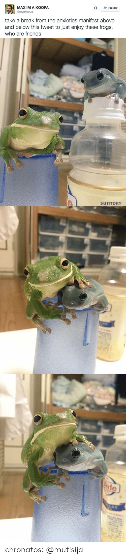 Friends, Tumblr, and Blog: МАX IM A КOOРА  @meakoopa  Follow  take a break from the anxieties manifest above  and below this tweet to just enjoy these frogs,  who are friends   SUNTORY   ele chronatos:  @mutisija
