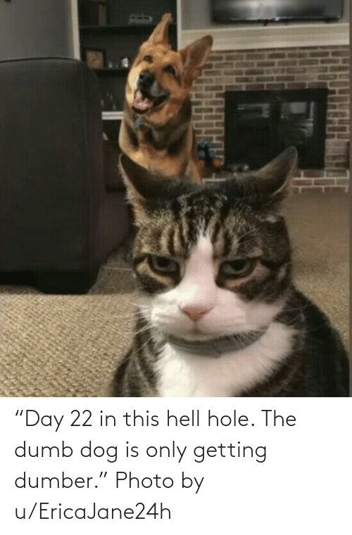 "The Dumb: ""Day 22 in this hell hole. The dumb dog is only getting dumber."" Photo by u/EricaJane24h"