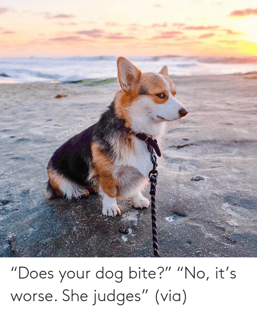 "Dog Bite: ""Does your dog bite?"" ""No, it's worse. She judges"" (via)"