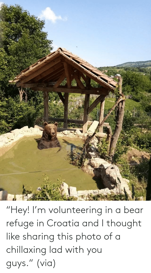 "hey: ""Hey! I'm volunteering in a bear refuge in Croatia and I thought like sharing this photo of a chillaxing lad with you guys."" (via)"