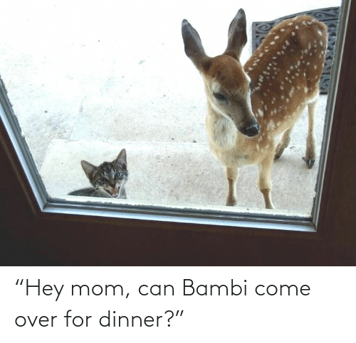 "hey: ""Hey mom, can Bambi come over for dinner?"""