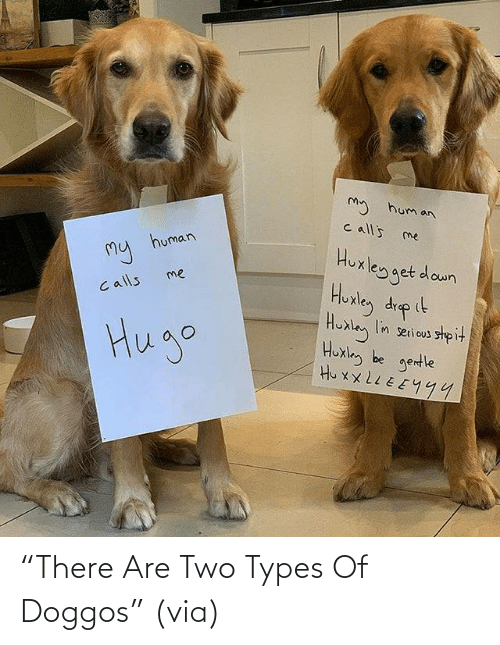 """There Are: """"There Are Two Types Of Doggos""""(via)"""