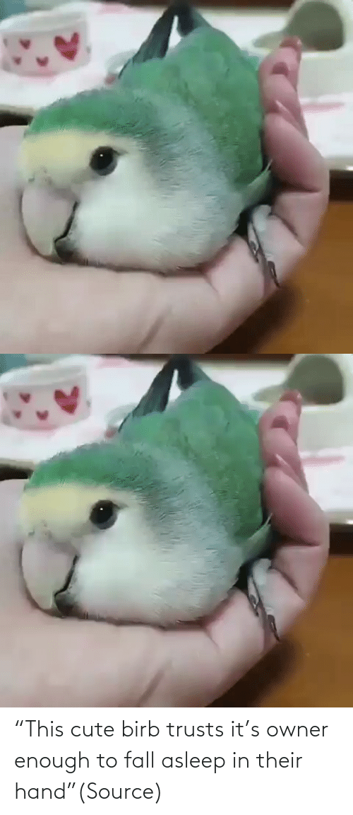 "Fall: ""This cute birb trusts it's owner enough to fall asleep in their hand""(Source)"