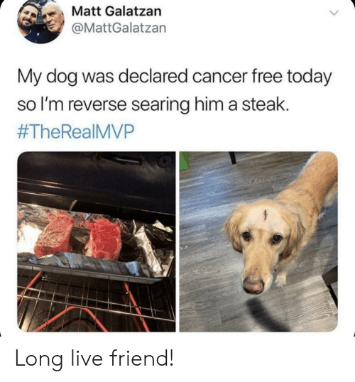 Cancer, Free, and Live: も、Matt Galatzan  @MattGalatzan  My dog was declared cancer free today  so l'm reverse searing him a steak.  #TheReal MVP Long live friend!