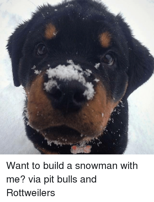 snowmans: 꽃 Want to build a snowman with me? via pit bulls and Rottweilers
