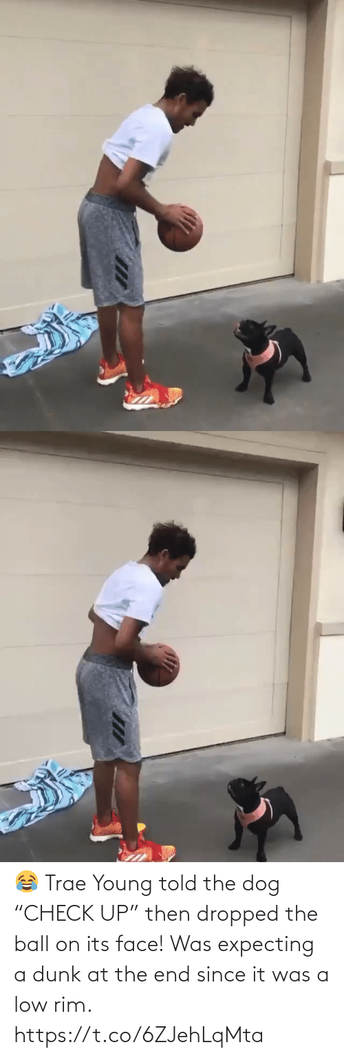 "the dog: 😂 Trae Young told the dog ""CHECK UP"" then dropped the ball on its face!  Was expecting a dunk at the end since it was a low rim. https://t.co/6ZJehLqMta"