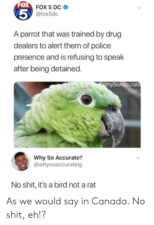 Police, Shit, and Canada: 0  FOX 5 Dc  @fox5dc  5  A parrot that was trained by drug  dealers to alert them of police  presence and is refusing to spealk  after being detained.  hySoAccurat  Why So Accurate?  @whysoaccurateig  No shit, it's a bird not a rat As we would say in Canada. No shit, eh!?