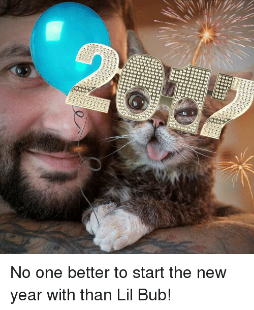 no-one-better: 0090  0000,00,0000  ①⑦DD  tTi  0,0 0,0 0,0  OOOOOOO  00000000  るりり  900 No one better to start the new year with than Lil Bub!
