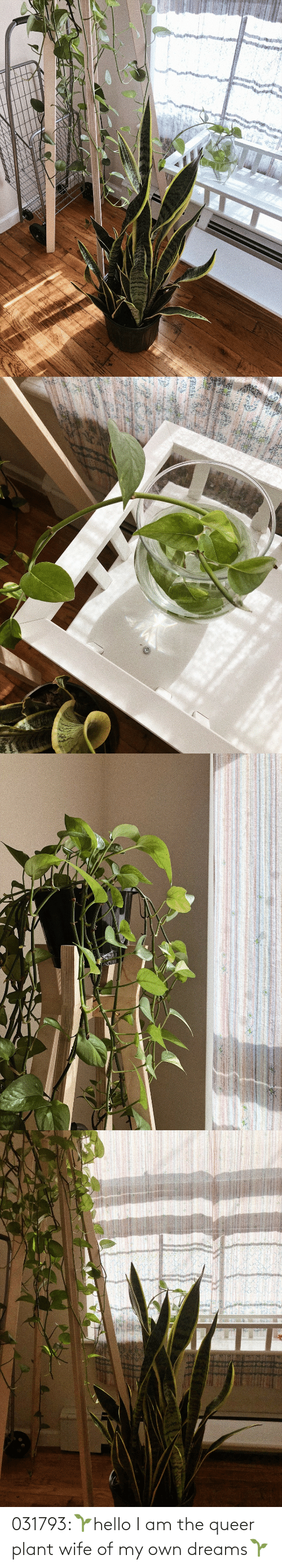 I Am The: 031793:🌱hello I am the queer plant wife of my own dreams🌱