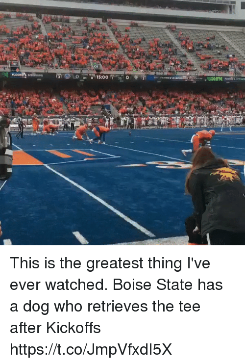 Girl Memes, Dog, and Who: 08  st o This is the greatest thing I've ever watched. Boise State has a dog who retrieves the tee after Kickoffs  https://t.co/JmpVfxdI5X