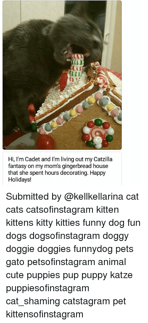 Cats, Cute, and Dogs: 0D  CTI  Hi, I'm Cadet and I'm living out my Catzilla  fantasy on my mom's gingerbread house  that she spent hours decorating. Happy  Holidays! Submitted by @kellkellarina cat cats catsofinstagram kitten kittens kitty kitties funny dog fun dogs dogsofinstagram doggy doggie doggies funnydog pets gato petsofinstagram animal cute puppies pup puppy katze puppiesofinstagram cat_shaming catstagram pet kittensofinstagram