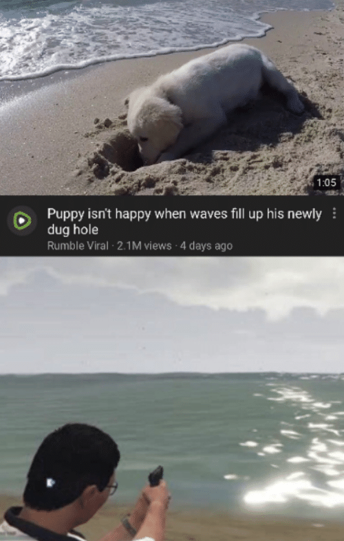 4 Days: 1:05  Puppy isn't happy when waves fill up his newly  dug hole  Rumble Viral 2.1M views 4 days ago