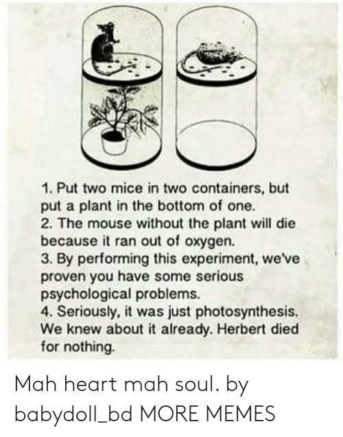 Dank, Memes, and Target: 1. Put two mice in two containers, but  put a plant in the bottom of one.  2. The mouse without the plant will die  becauseit ran out of oxygen.  3. By performing this experiment, we've  proven you have some serious  psychological problems.  4. Seriously, it was just photosynthesis.  We knew about it already. Herbert died  for nothing. Mah heart mah soul. by babydoll_bd MORE MEMES
