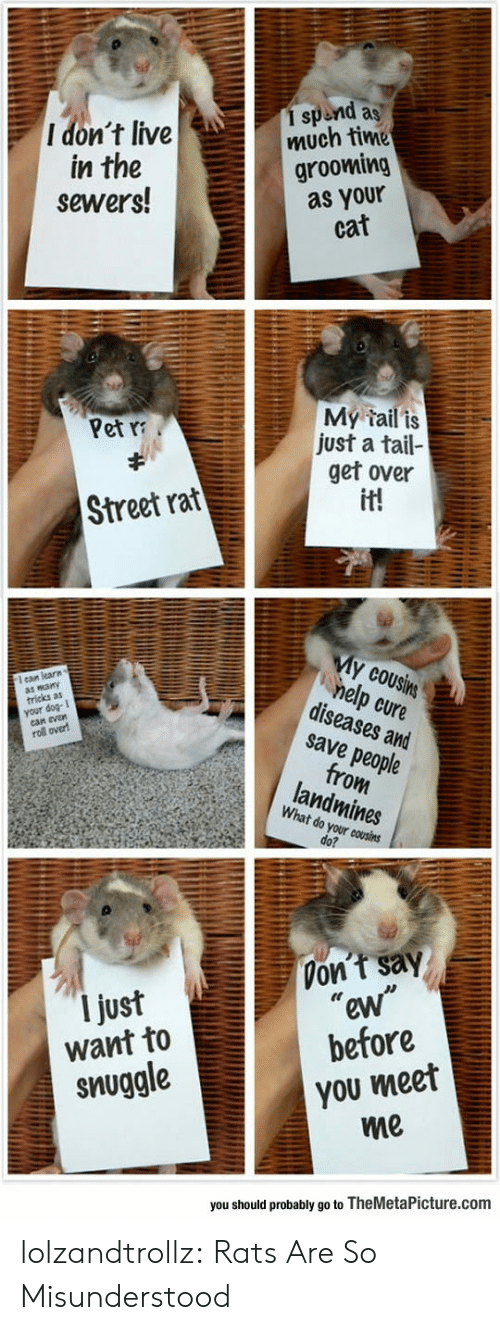 """Meet Me: 1 spend as  much time  grooming  as your  cat  I don't live  in the  sewers!  My tail is  just a tail-  get over  it!  Pet  Street rat  My cousins  help cure  diseases and  save people  from  landmines  ean learn  wany  tricks as  your  evan  roll over  What do your cousins  do?  Don't say  """"ew""""  before  I just  want to  you meet  me  snuggle  you should probably go to TheMetaPicture.com lolzandtrollz:  Rats Are So Misunderstood"""
