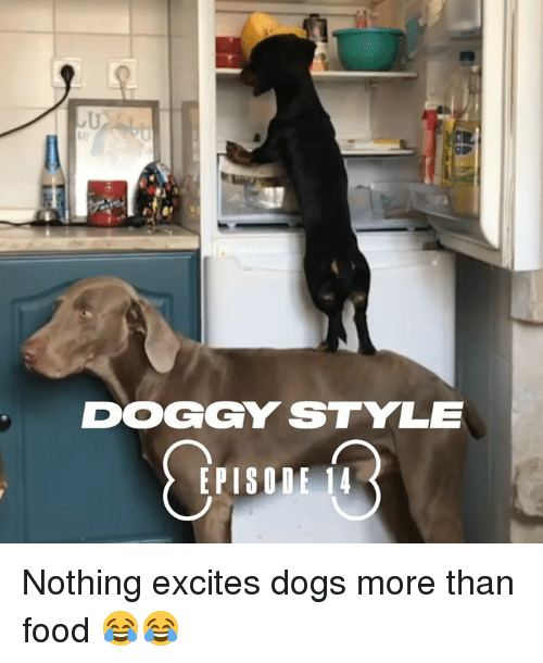 Dank, Doggy Style, and Dogs: 10  DOGGY STYLE  EPISODE 14 Nothing excites dogs more than food 😂😂