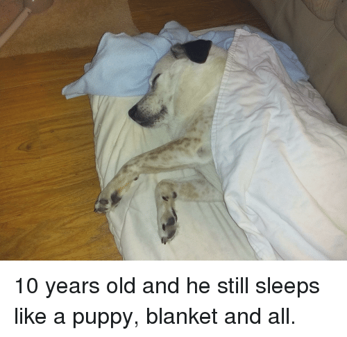 Puppy, Old, and 10 Years
