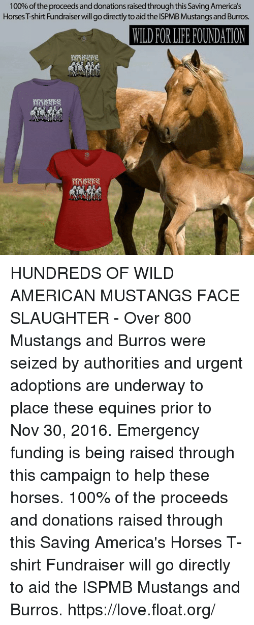 save the american wild mustangs Wild horses: herds and harems wild horses mustangs and the land herds and harems like all wild horses, the pryor mustangs are herd animals living off the land in.