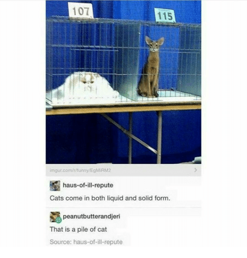 Memes, Imgur, and 🤖: 101  115  imgur.com/r/unny/EgMIRM2  haus-of-ill-repute  Cats come in both liquid and solid form  peanutbutterandjeri  That is a pile of cat  Source: haus-of-ill-repute