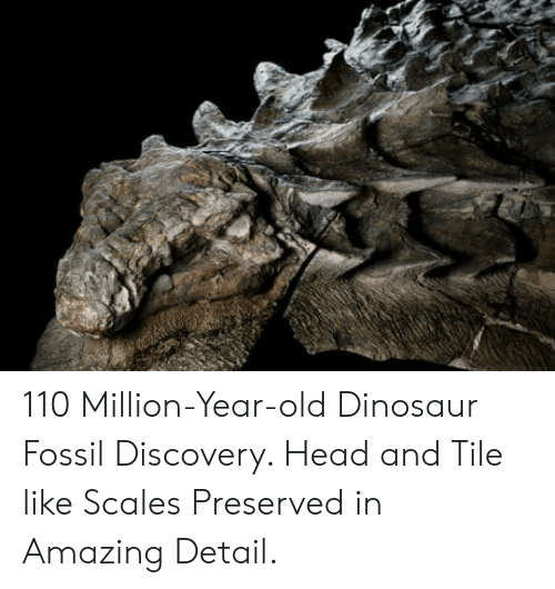 Andrew Bogut, Dinosaur, and Head: 110 Million-Year-old Dinosaur Fossil Discovery. Head and Tile like Scales Preserved in Amazing Detail.