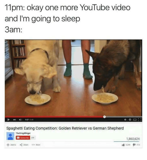youtube.com, German Shepherd, and Golden Retriever: 11pm: okay one more YouTube video  and I'm going to sleep  3am:  山!  p  4)  1:57 / 2:41  Spaghetti Eating Competition: Golden Retriever vs German Shepherd  TheBragdBirger  Subscribe  206  1,860,624  AddtoShoreMore  3.249タ1113