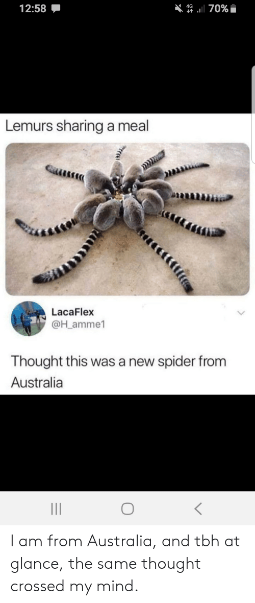 tbh: 12:58  4670%  Lemurs sharing a meal  LacaFlex  @H_amme1  Thought this was a new spider from  Australia I am from Australia, and tbh at glance, the same thought crossed my mind.