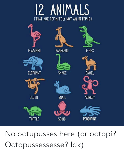 Animals, Definitely, and Elephant: 12 ANIMALS  [THAT ARE DEFINITELY NOT AN OCTOPUS]  FLAMINGO  KANGAROO  T-REX  ELEPHANT  SNAKE  CAMEL  SLOTH  SNAIL  MONKEY  TURTLE  SQUID  PDRCUPINE No octupusses here (or octopi? Octopussessesse? Idk)