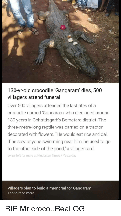 "Saw, Flowers, and Old: 130-yr-old crocodile 'Gangaram' dies, 500  villagers attend funeral  Over 500 villagers attended the last rites of a  crocodile named Gangaram' who died aged around  130 years in Chhattisgarh's Bemetara district. Thee  three-metre-long reptile was carried on a tractor  decorated with flowers. ""He would eat rice and dal.  If he saw anyone swimming near him, he used to go  to the other side of the pond,"" a villager said.  swipe left for more at Hindustan Times/Yesterday  Villagers plan to build a memorial for Gangaram  Tap to read more RIP Mr croco..Real OG"