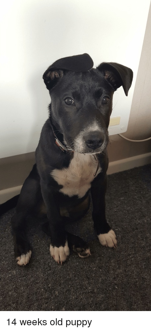 Puppy, Old, and Weeks