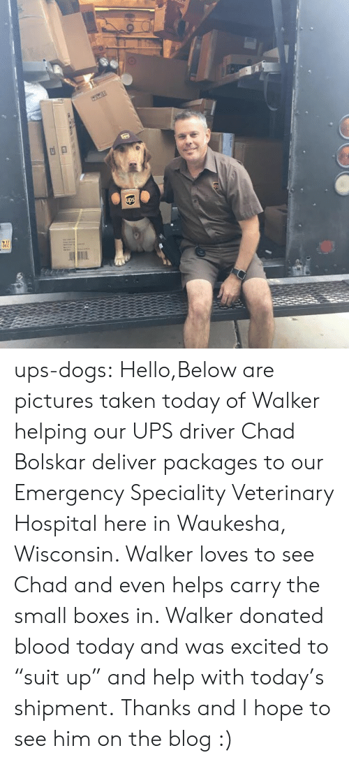 "Dogs, Hello, and Taken: 17  DEC ups-dogs: Hello,Below are pictures taken today of Walker helping our UPS driver Chad Bolskar deliver packages to our Emergency  Speciality Veterinary Hospital here in Waukesha, Wisconsin. Walker loves to see Chad and even helps carry the small boxes in. Walker donated blood today and was excited to ""suit up"" and help with today's shipment. Thanks and I hope to see him on the blog :)"
