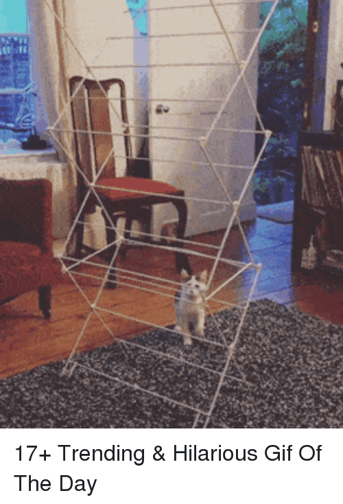 Gif, Hilarious, and Day: 17+ Trending & Hilarious Gif Of The Day