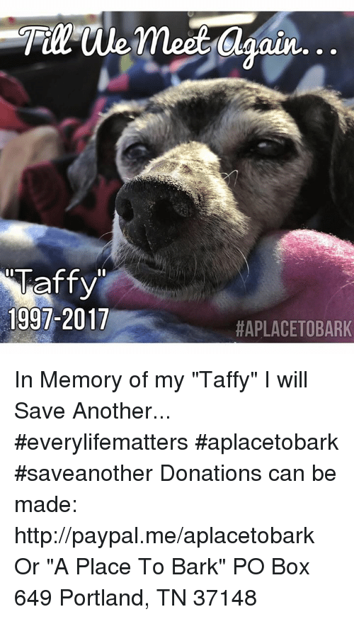 """Memes, Http, and Paypal: 1997-2017  Oun...  HAPLACETOBARK In Memory of my """"Taffy"""" I will Save Another...  #everylifematters #aplacetobark #saveanother    Donations can be made:  http://paypal.me/aplacetobark Or  """"A Place To Bark"""" PO Box 649 Portland, TN 37148"""