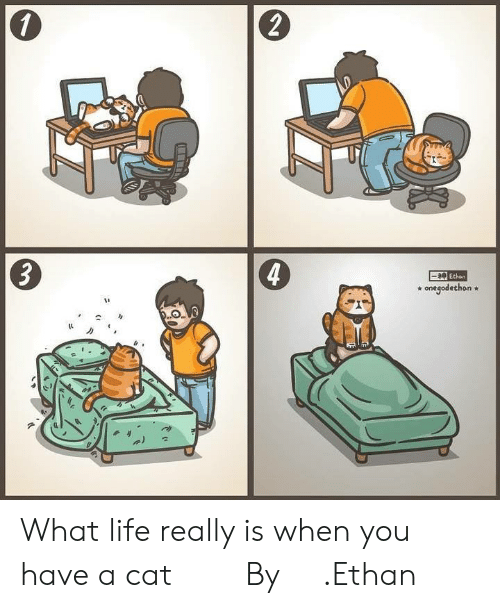 Dank, Life, and 🤖: 2  4  Ethen  * onegodethon* What life really is when you have a cat ⠀ ⠀ By 一神.Ethan