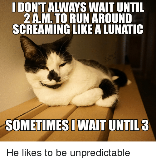 LOLcats: 2 A.M. TO RUN AROUND  SCREAMING LIKE ALUNATIC  SOMETIMESIWAIT UNTIL 3 He likes to be unpredictable