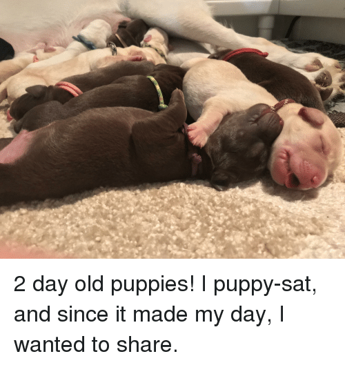 Puppies, Puppy, and Old