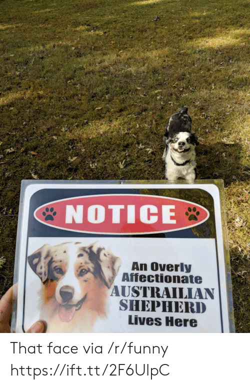 Funny, Via, and Face: 2  NOTICE  An Overly  Affectionate  AUSTRAILIAN  SHEPHERD  Lives Here That face via /r/funny https://ift.tt/2F6UlpC