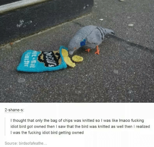 Lmaoo: 2-shane-s:  I thought that only the bag of chips was knitted so I was like lmaoo fucking  idiot bird got owned then l saw that the bird was knitted as well then I realized  I was the fucking idiot bird getting owned  Source: birdsofafeathe...