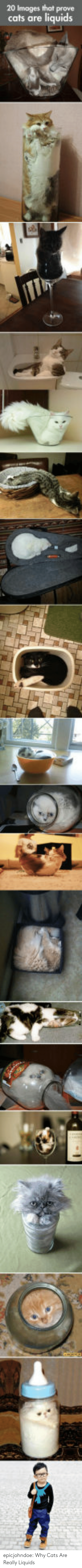 Cats, Tumblr, and Blog: 20 Images that prove  cats are liquids epicjohndoe:  Why Cats Are Really Liquids
