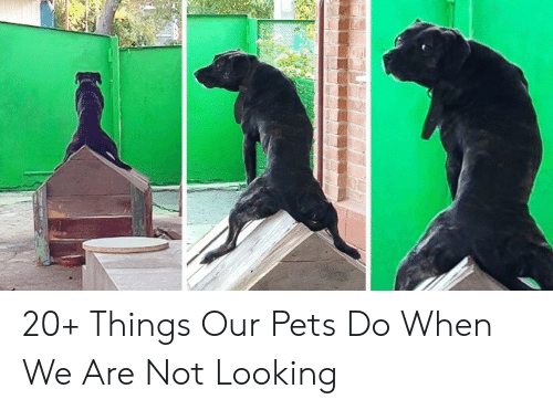 Pets: 20+ Things Our Pets Do When We Are Not Looking