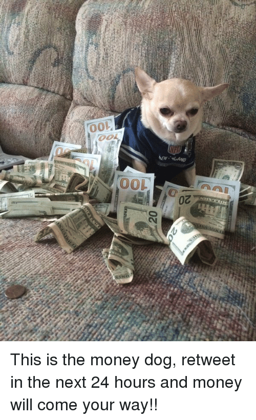 Money Dog: 20  Toe  100  20 This is the money dog, retweet in the next 24 hours and money will come your way!!