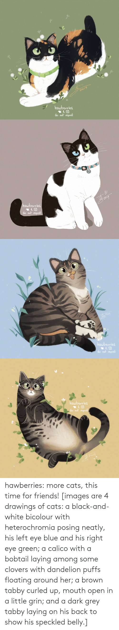 eye: 2019  hawberries  do not repost   hawberries  do not repost   hawberries  do not repost   hawberries  do not repost hawberries: more cats, this time for friends! [images are 4 drawings of cats: a black-and-white bicolour with heterochromia posing neatly, his left eye blue and his right eye green; a calico with a bobtail laying among some clovers with dandelion puffs floating around her; a brown tabby curled up, mouth open in a little grin; and a dark grey tabby laying on his back to show his speckled belly.]